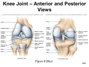 patello-femoral-joint